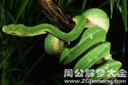 很长很长的蛇
