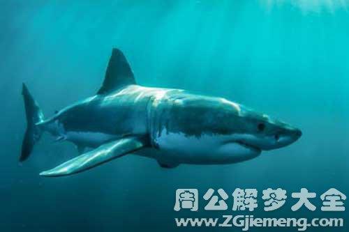 梦见杀死鲨鱼