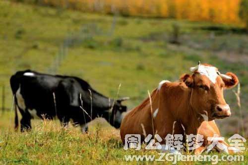 梦见牛在牛圈里