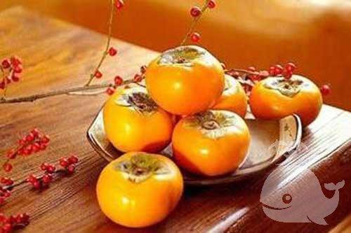 梦见摘柿子